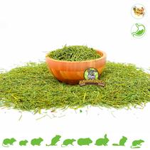 Dried parsley stems
