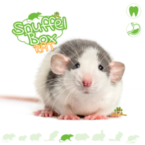 Sniffing box Rat # 01