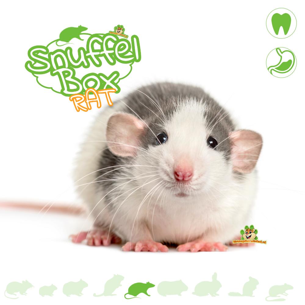 Knaagdierwinkel® Snuffelbox Rat #01