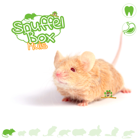 Knaagdierwinkel® Sniffing box Mouse # 02
