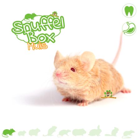 Knaagdierwinkel® Snuffelbox Muis #02