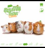 Knaagdierwinkel® Snuffelbox Cavia #01