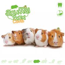 Snuffle box Guinea pig #02
