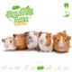 Knaagdierwinkel® Schnüffelbox Meerschweinchen #02
