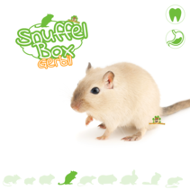 Sniffing box Gerbil # 01
