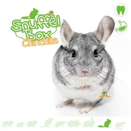 Knaagdierwinkel® Snuffelbox Chinchilla #02