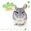 Knaagdierwinkel® Sniffing box Chinchilla # 01