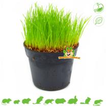 Verse BIO Kattengras Plant Fijn