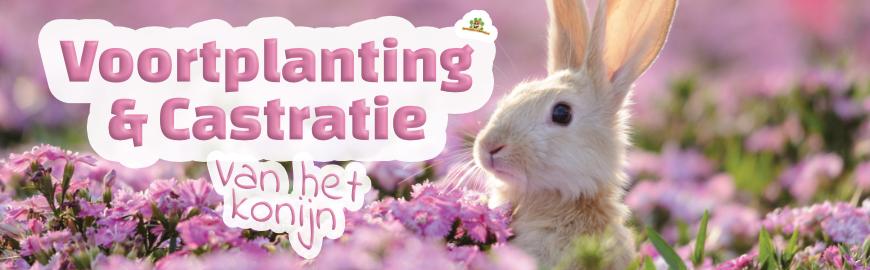 Voortplanting en castratie van een konijn