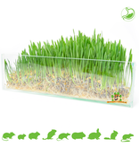 Trixie Rodent grass 100 grams