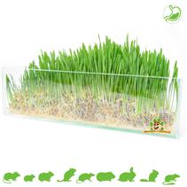 Rodent grass 100 grams