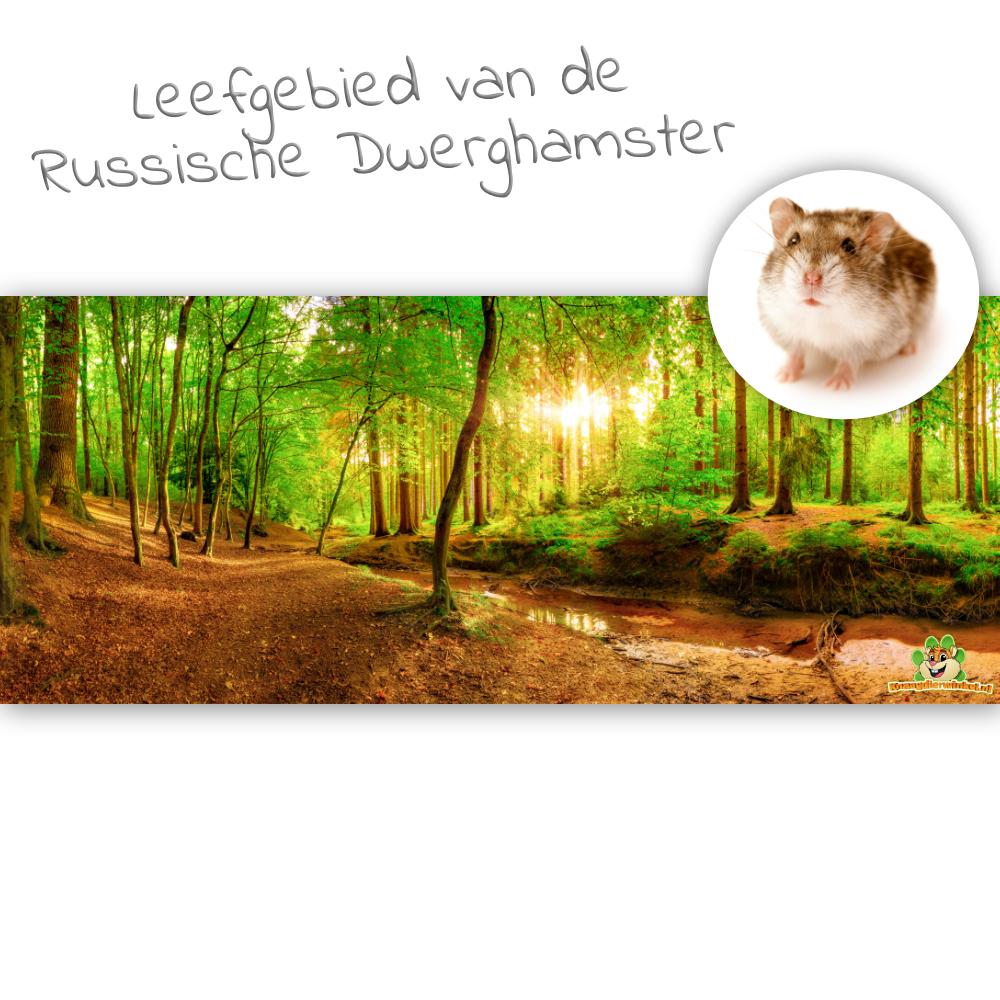 Knaagdierwinkel® HD Terrarium Background Habitat of the Russian Dwarf Hamster