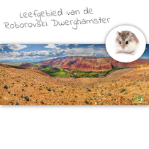 HD Terrarium Achtergrond Leefgebied van de Roborovski Dwerghamster