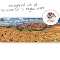 HD Terrarium Background Habitat of the Roborovski Dwarf Hamster