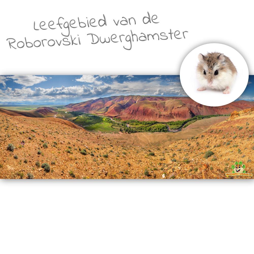 Knaagdierwinkel® HD Terrarium Hintergrund Lebensraum des Roborovski Zwerghamsters