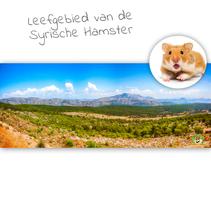 HD Terrarium Background Habitat of the Syrian Hamster