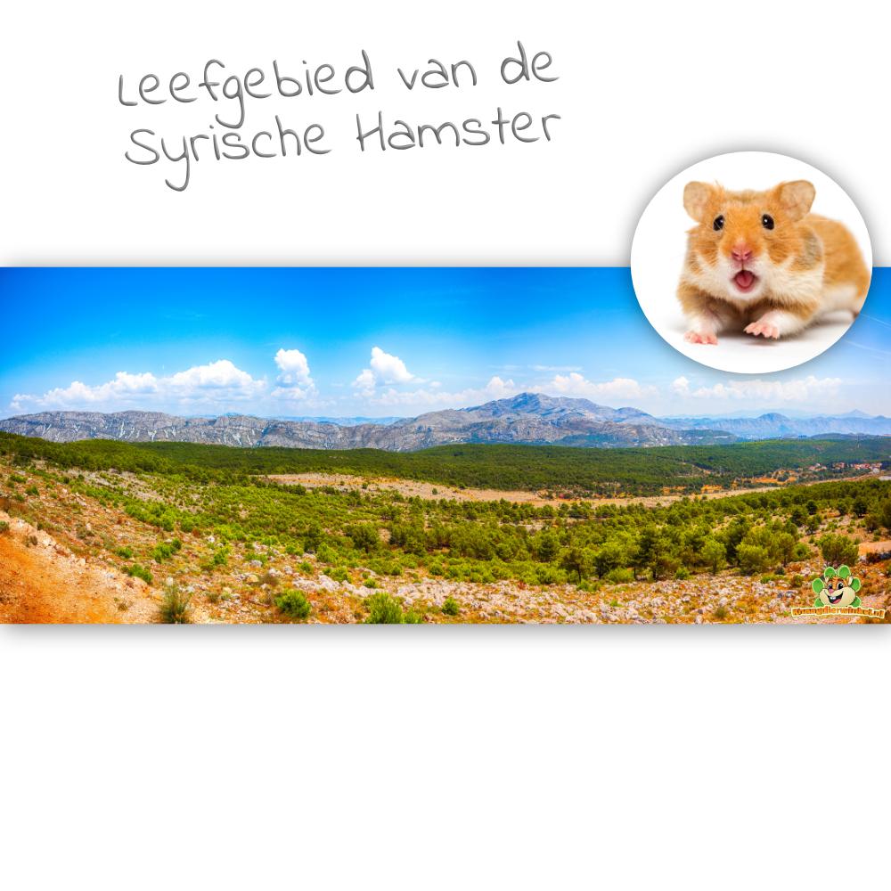 Knaagdierwinkel® HD Terrarium Achtergrond Leefgebied van de Syrische Hamster
