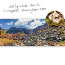 HD Terrarium Achtergrond Leefgebied van de Campbelli Dwerghamster