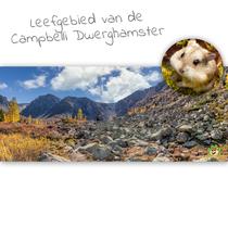 HD Terrarium Hintergrund Lebensraum des Campbelli Zwerghamsters