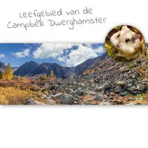 HD Terrarium Background Habitat of the Campbelli Dwarf Hamster
