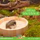 OUTLET Hamsterscaping Zandbak