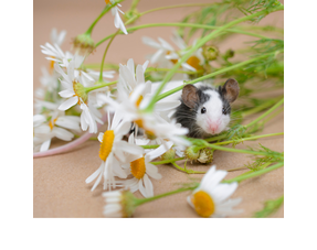 Mouse Hay, Herbs and Seeds