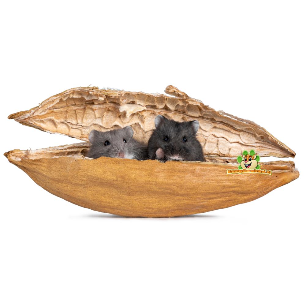 kapok voor hamsters en dwerghamsters als nestmateriaal