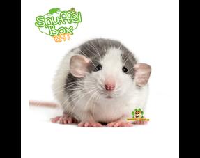 Rattenpakete
