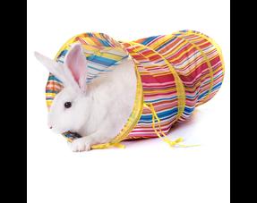 Rabbit Tunnels