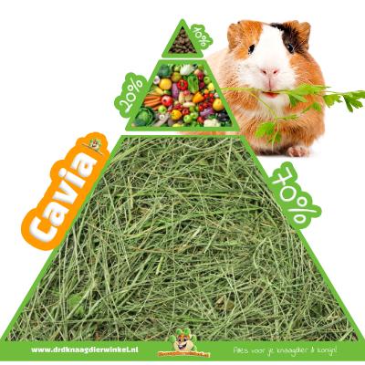 Meerschweinchenfutter und Meerschweinchen-Ernährungspyramide