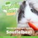 Knaagdierwinkel® Snuffelbox Cavia #02