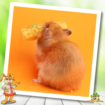 Mealberry Little One Kekse Karotte & Spinat