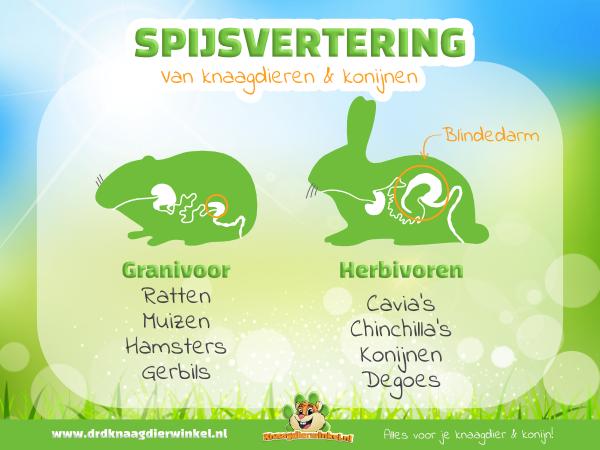 spijsverteringsstelsel knaagdier en konijn en granivoor en herbivoor