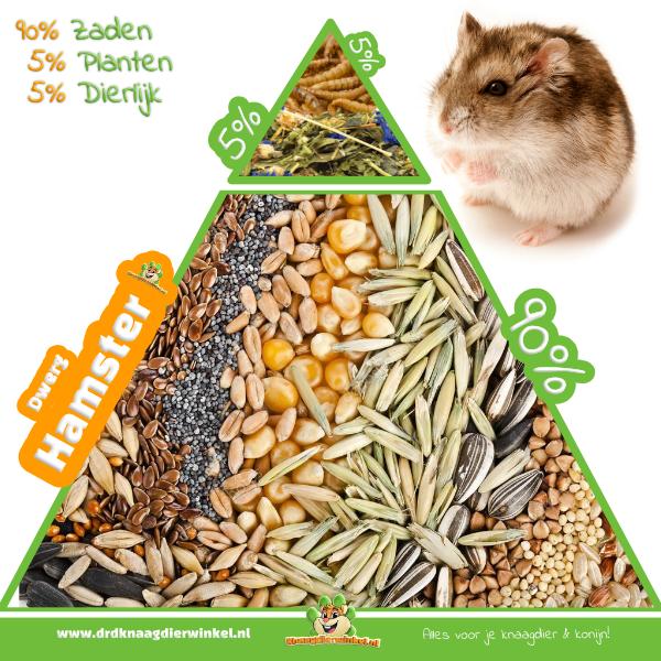 dwerghamster granivoor voeding en voer hamster