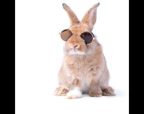 Kaninchen Sommerprodukte