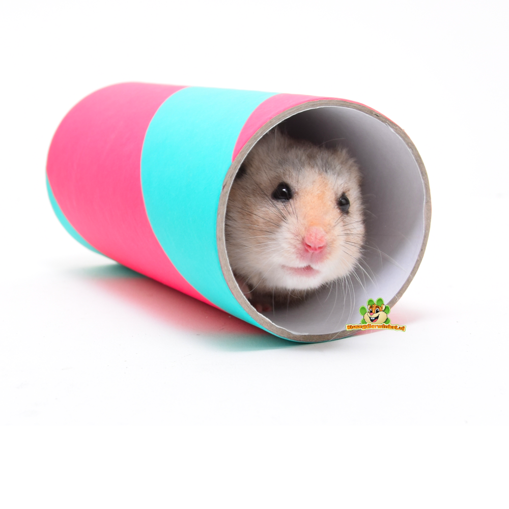 hamster en dwerghamster tunnel