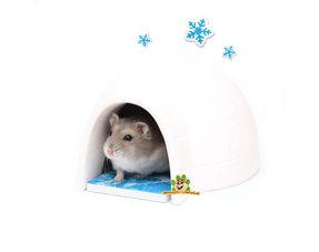 Hamster Summer Products