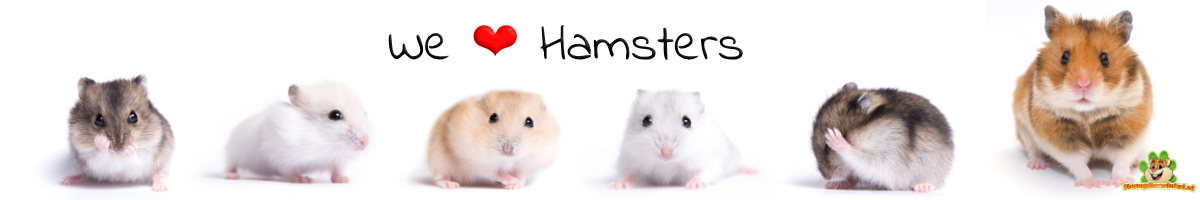 hamsters and dwarf hamsters