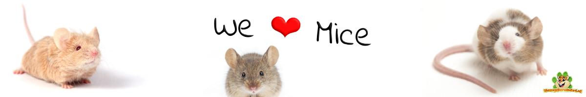 muizen en kleurmuizen of muisjes benodigdheden en toebehoren