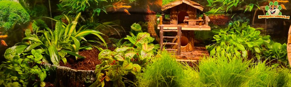 natuurlijke inrichting hamster dwerghamster met hamsterscaping en plantjes