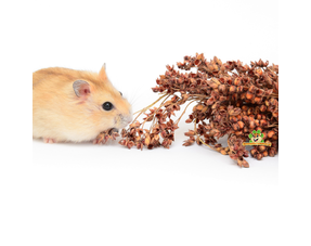Hamster Herbs and Seeds