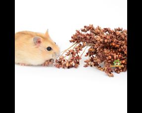 Hamsterkräuter und -samen