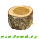 Hugro Auratus Cup 10 cm