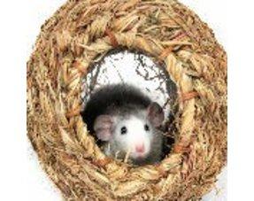 Ratten Nistmaterial