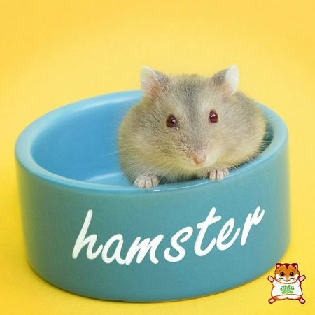 Hamster Pet Bowl 6 cm