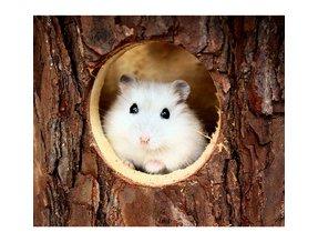 Hamsterhäuser