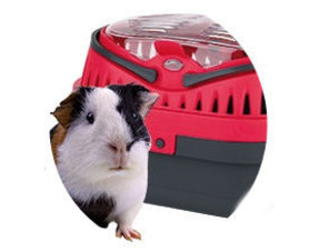 Guinea pig transport boxes