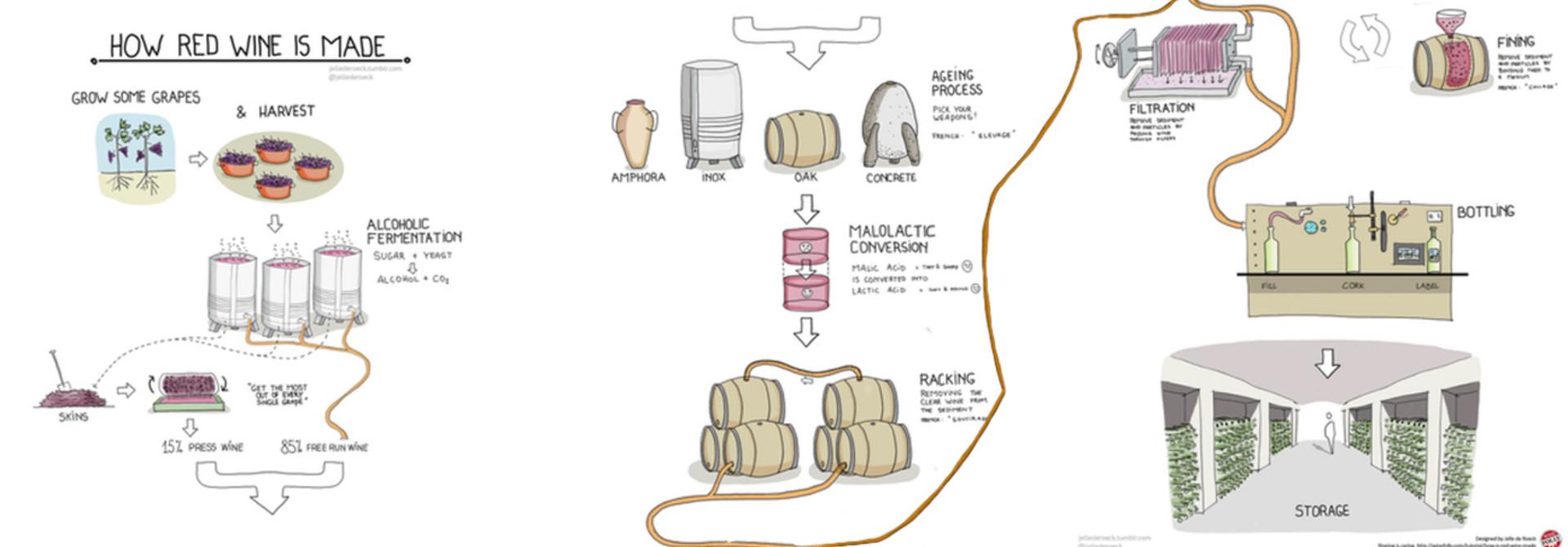 Infographic: Hoe rode wijn wordt gemaakt.