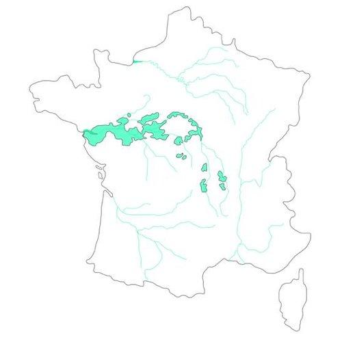 Selectie van onze wijnen uit Loire