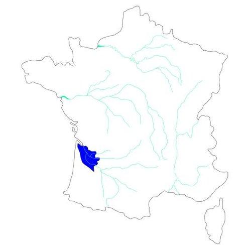 Selectie van onze wijnen uit Bordeaux